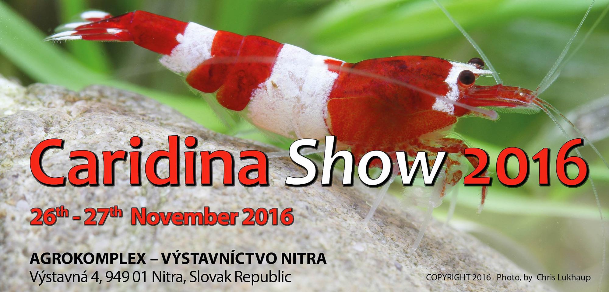 Caridina Show