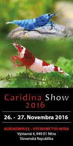 caridina-show-2016-banner